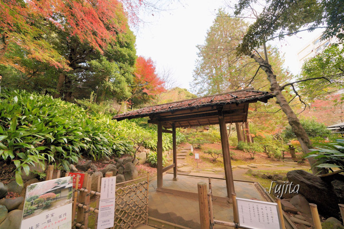 茶庭の紅葉も美しい!
