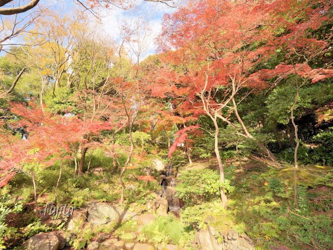 日本庭園の紅葉を一望!