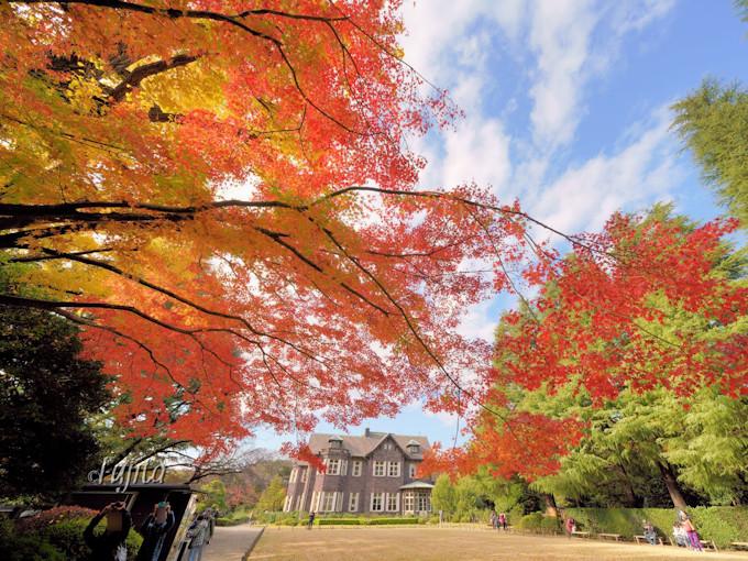 旧古河庭園は紅葉の名所!