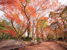 神代植物公園の紅葉は晩秋まで見頃!東京でバラの花見と紅葉狩り