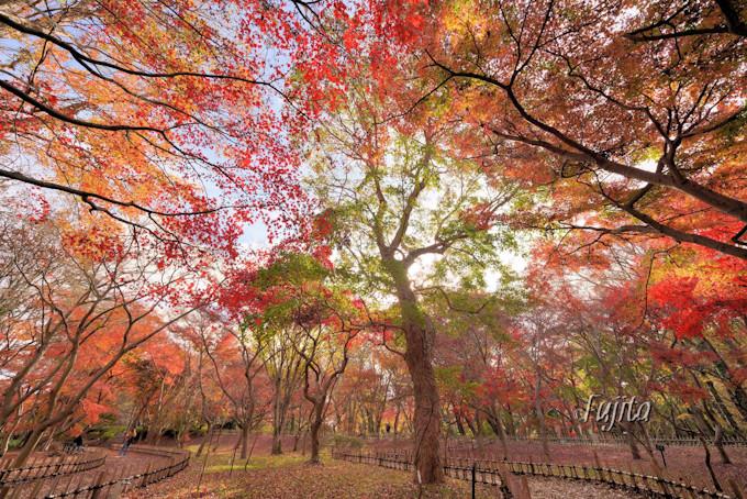 かえで園が紅葉の絨毯に!ベンチから紅葉狩り