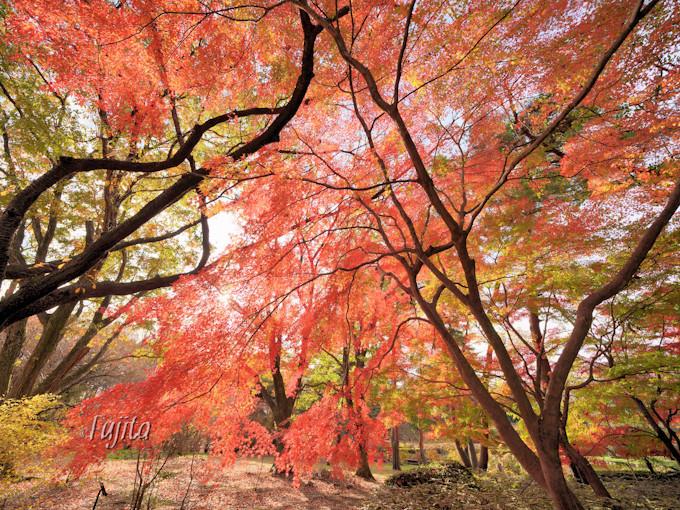築山の紅葉は晩秋も美しい!