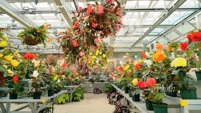 神代植物公園では紅葉の時期に花見も可能!