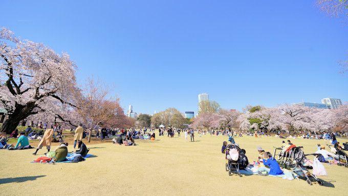 新宿御苑の花見は「桜園地」がおすすめ!