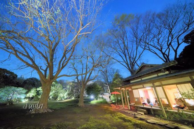 こぶしの大木が大名庭園とコラボ!
