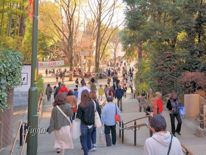 井の頭公園の桜を七井橋から一望!