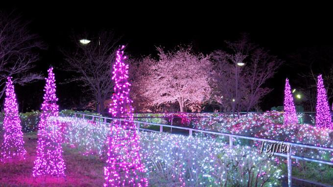 舎人公園駅前の夜桜はイルミネーションも!