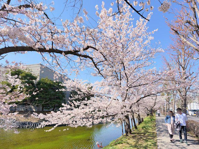 お堀の桜も必見!