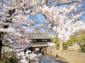 長野・懐古園(小諸城址)の桜は石垣とコラボ!オリジナル品種も必見
