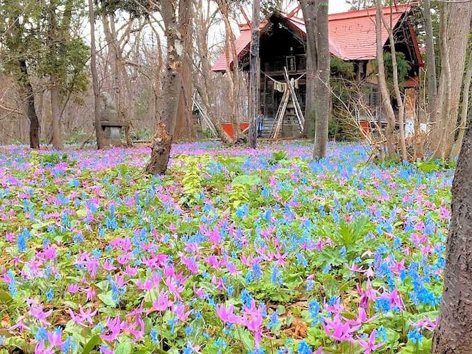 花畑に囲まれた浦臼神社