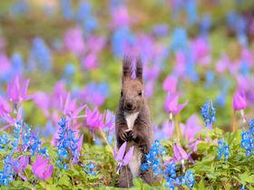 エゾリスと花畑がコラボ!北海道・浦臼神社の春はメルヘンチック