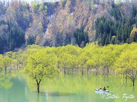 水没林が幻想的!山形・白川ダム湖岸公園で白川湖の春を満喫