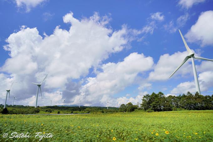 林立する風車が壮観!巨大風力発電所の花畑