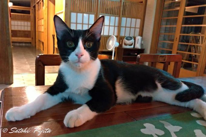 神丘温泉「豊山荘」は猫が居る交通至便な宿!