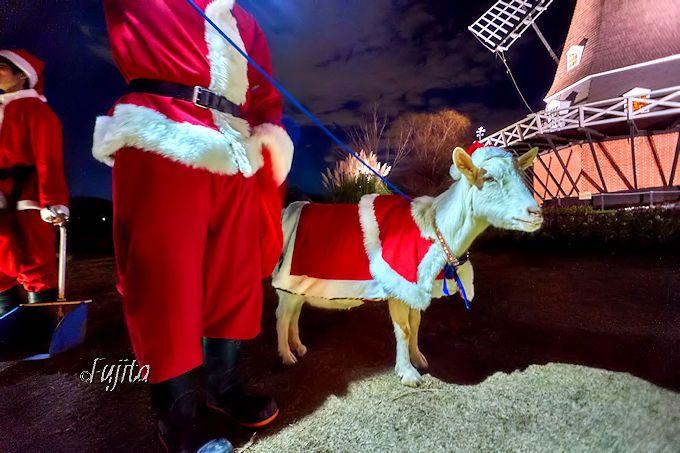 クリスマスは「ヤギサンタ」が主役!
