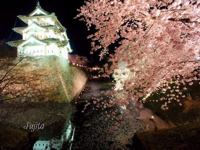 本物の天守閣と桜がコラボ!