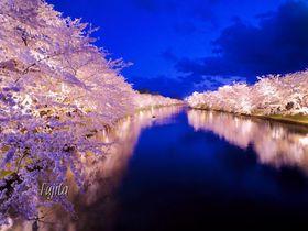 弘前城・桜の絶景ベスト5!弘前公園のおすすめ花見スポット