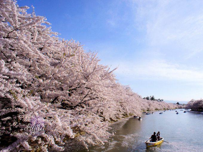 西濠の桜は昼も夜も必見!