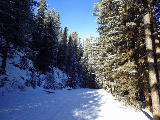 雪に包まれた静かな樹林帯を歩くミネワンカトレイルの魅力