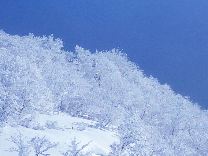 樹氷と氷原が美しい南比良最高峰、蓬莱山