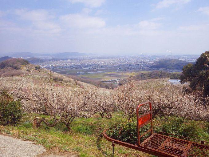山の上からの眺めに感動!梅林の向こうに見える播州平野と瀬戸内海!