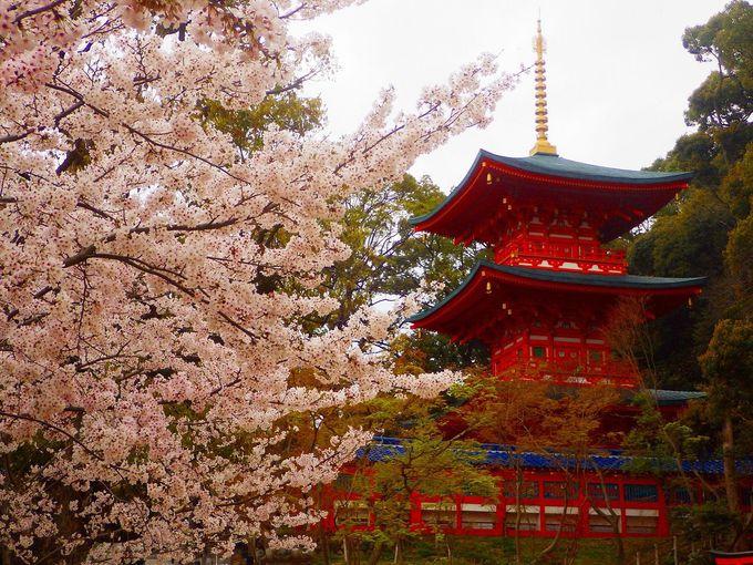 光源氏が桜を植えたという伝説の地、須磨寺