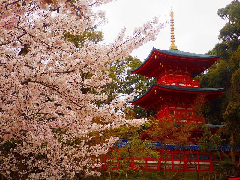 源氏物語の舞台!神戸・須磨寺とその周辺を訪ねる