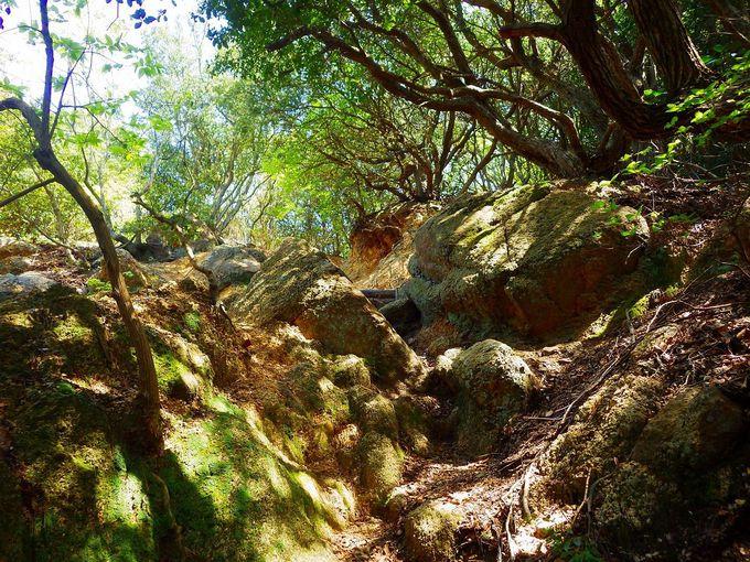 稲妻坂、天狗道、アゴニー坂、登り応えのある野生的な坂も見逃せない!