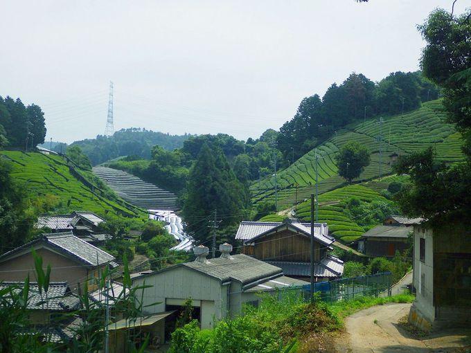 過去から現代に続く悠久の営み。宇治茶生産の集落を訪ねる