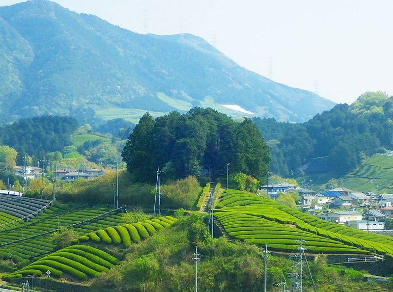 天空カフェは必訪!日本で最も美しい村・京都府和束町の魅力