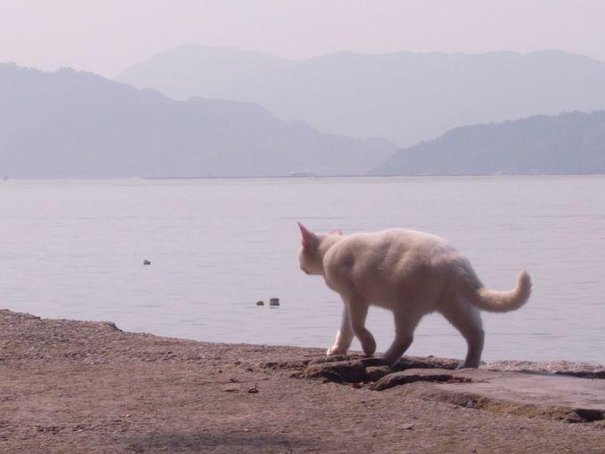 意外と知られていない!?元宇品は猫の島
