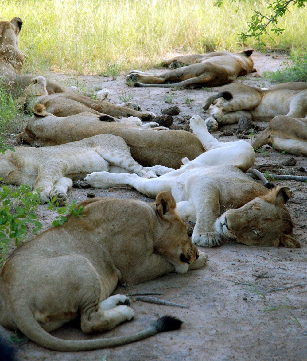 """野生動物の宝庫、南アフリカへ。""""贅沢""""な格安サファリを楽しむ方法"""