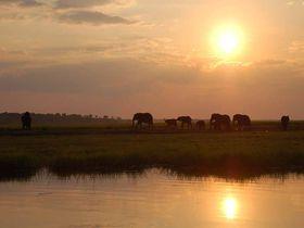 ゾウの楽園、ボツワナ・チョベ国立公園へ。野生に囲まれて過ごす休日