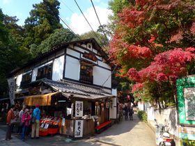 そばまつりも開催!紅葉色づく東京・深大寺で祈って食べて体験する