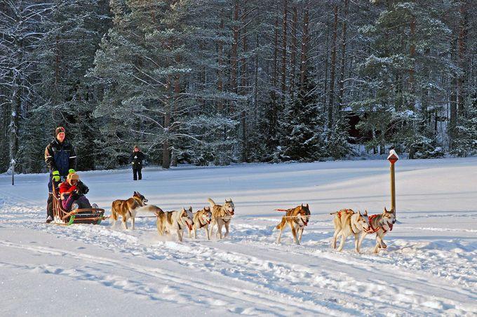迫力満点!犬に引かれて雪原を駆け抜ける!