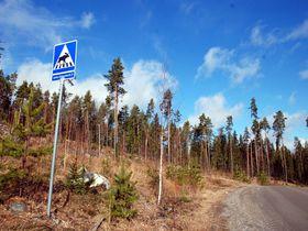 大自然の中でリチャージ!フィンランド湖水地方レモンカルキで暮らすように滞在する