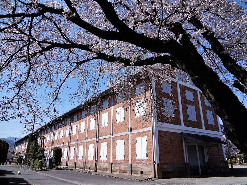 世界遺産で花見はいかが?群馬・富岡製糸場の桜がすごい!