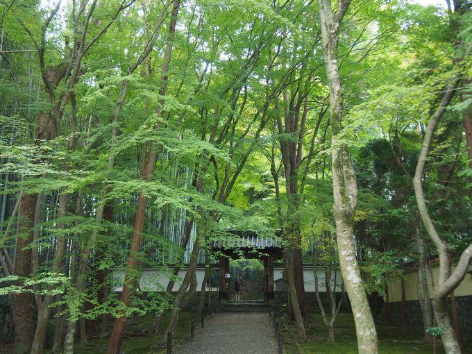 """境内が竹に包まれた""""竹の寺""""「地蔵院」"""