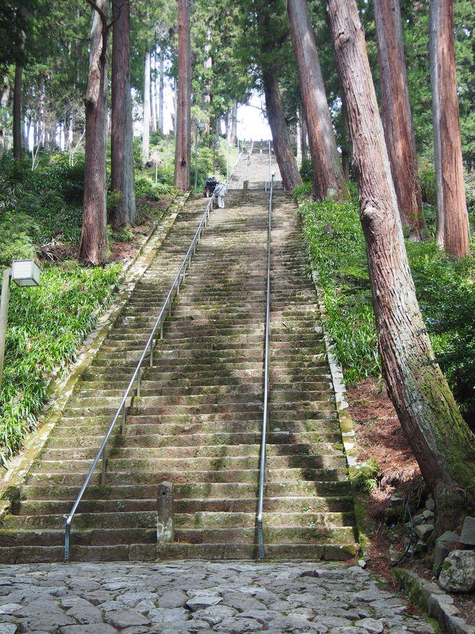 杉木立に囲まれた「菩提梯」