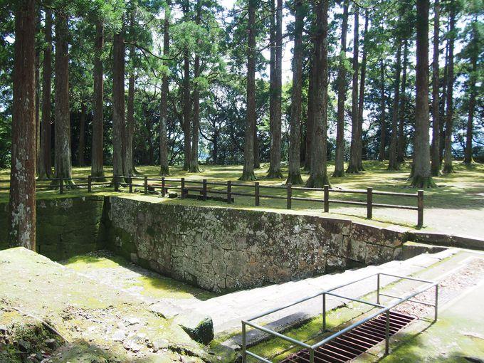 杉木立が支配する「飫肥城跡・旧本丸」