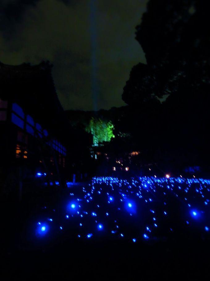 青い光がまるで蛍のように灯る!幻想的な光景に癒される青蓮院門跡の夜間拝観