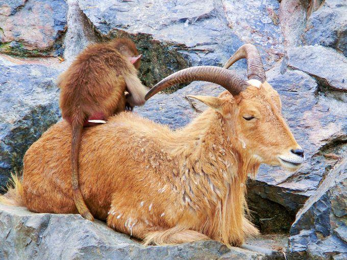野生に近い環境で動物たちが仲良く共存♪