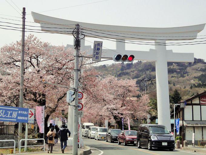 宝登山参道の桜並木