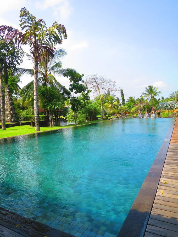 椰子の木が揺れる静かで居心地のよいパブリックプール