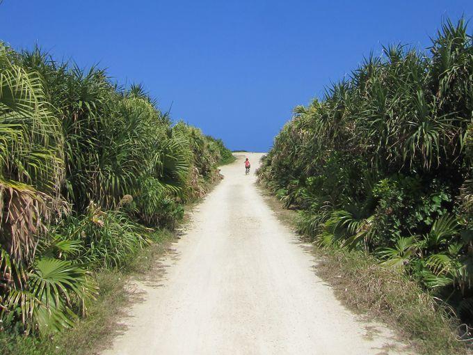 島内散策には自転車がオススメ