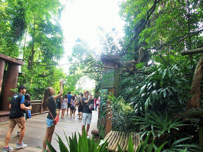 ジャングルの中で味わうリアルな体験!シンガポール動物園