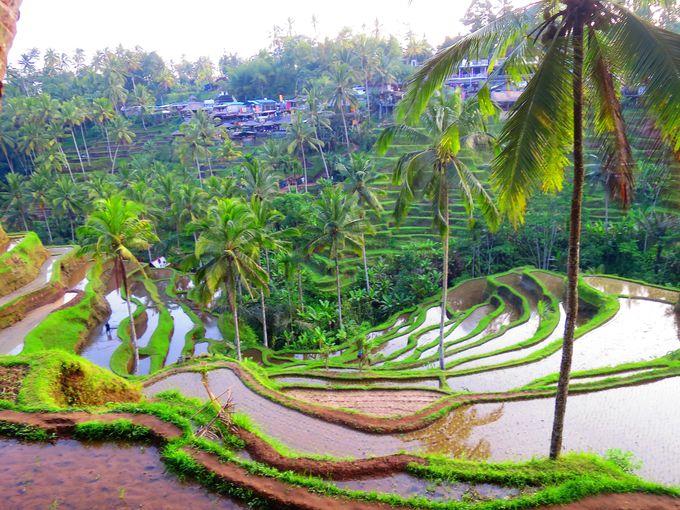 美しい曲線を描くライステラスの絶景を間近に鑑賞!対岸から見る景色もまた絶景