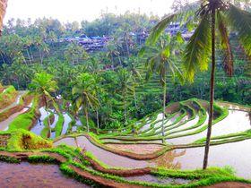 絶景の中へ!バリ島・テガラランの美しいライステラスを散策