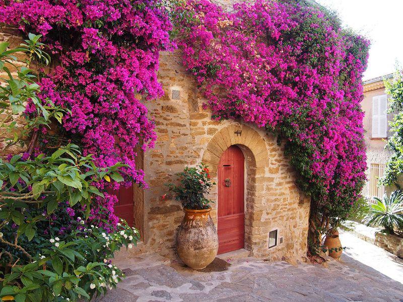 感動のブーゲンビリア!花に愛されたフランス ボルムレミモザの美しい世界