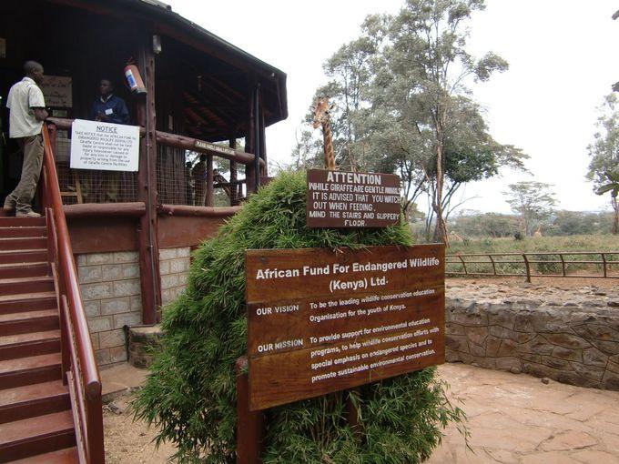 危機に瀕したキリンを保護する目的で設立された機関AFEW